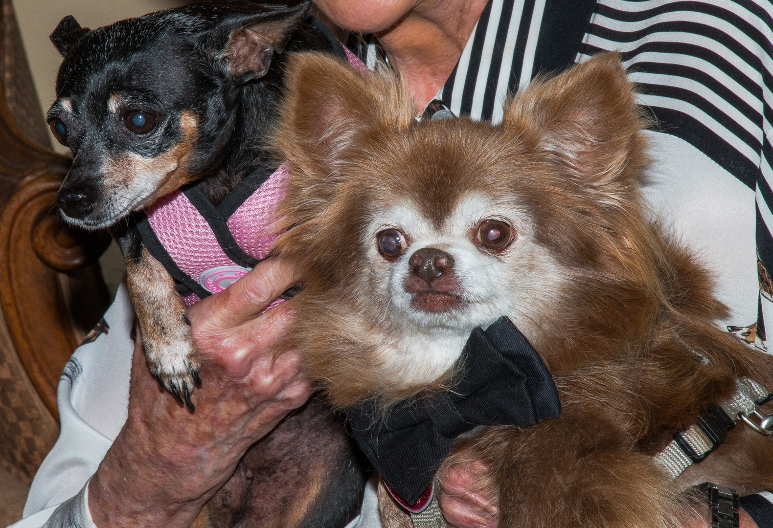 Sally Jordan's Rescue Pets
