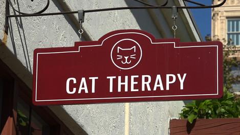 CatTherapy.jpg