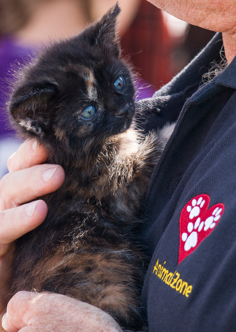 Kittens of AnimalZone