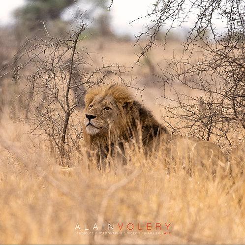SOUTH AFRICA | SAVANE