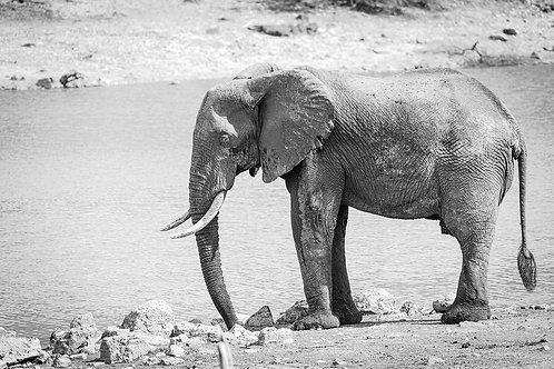 "TABLEAU   SAFARI ""ELEPHANT"" - II"