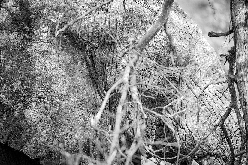 "TABLEAU | SAFARI ""ELEPHANT"" - III"