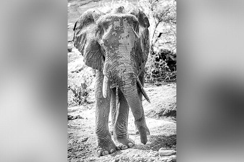 "TABLEAU   SAFARI ""ELEPHANT"" - IV"
