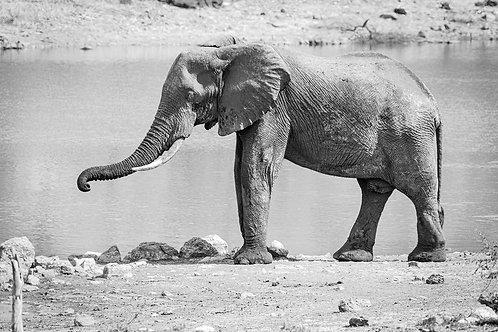 """TABLEAU   SAFARI """"ELEPHANT"""" - I"""