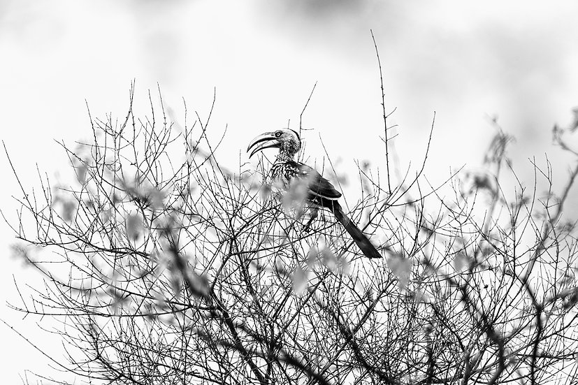 "TABLEAU | SAFARI ""BIRD"" - I"