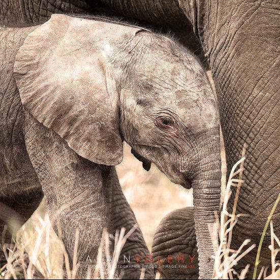 SOUTH AFRICA | BABY ELEFANTIS BIS