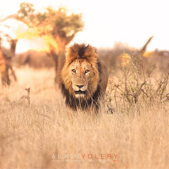 SOUTH AFRICA | IBHUBESI