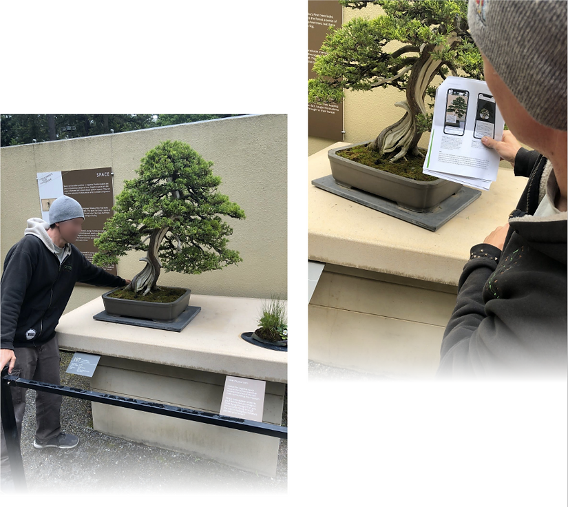 photos of feedback from bonsai museum staff