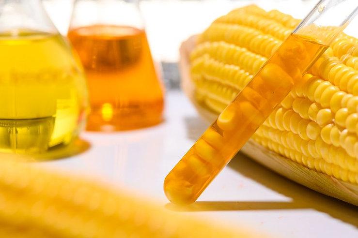 oil corn1.jpg