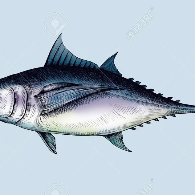 109218700-hand-drawn-tuna-fish.jpg