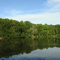 Reedy Creek.jpg