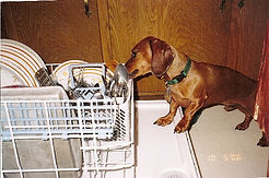 Ruff_doing_dishes.jpg