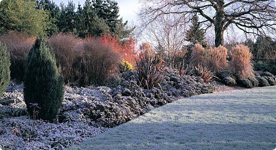winter-garden-550px.jpg