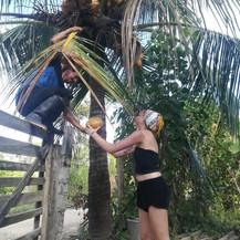 Fruits -Coconuts - Cocos