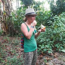 Fruits - Cacao
