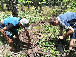 Ecotourism Peruvian Amazon - Visiting local plantation - Harvesting yuca in Puerto Inca, Huanuco, Peru