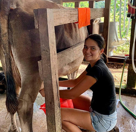 Cheese Workshop in the Peruvian Amazon - Learn how to make artisanal cheese in Puerto Inca, Huanuco, Peru