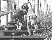 soziale-interaktion-hund_edited_edited.j