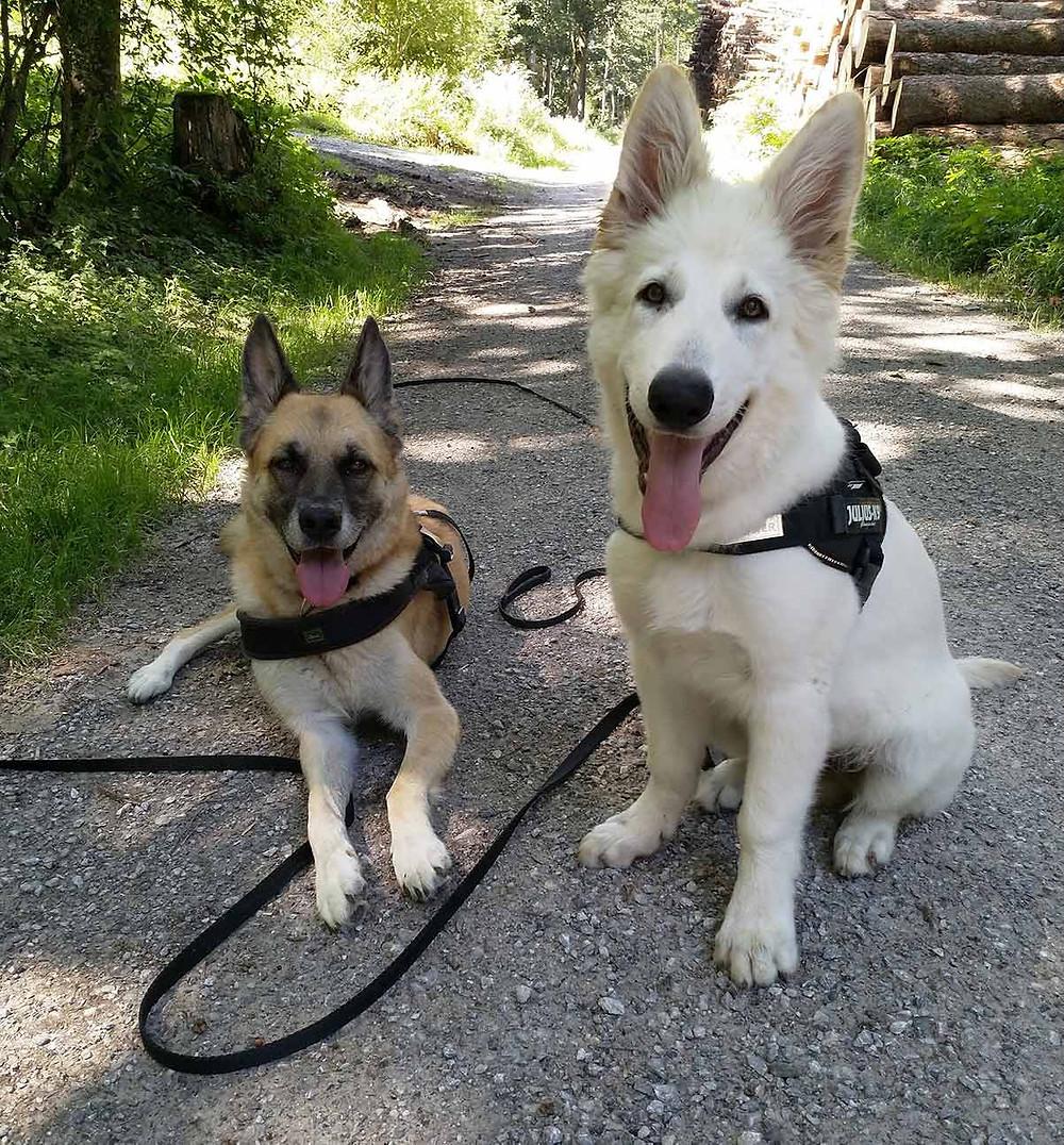 Hundeerziehung - Hundeschule Horgen