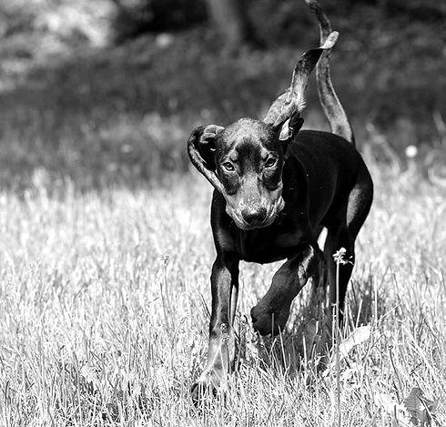 hundetrainer-wadenswil_edited.jpg
