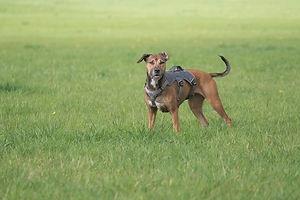 hund-spurensuche.jpg