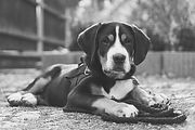 dog-6156345_1920_edited.jpg