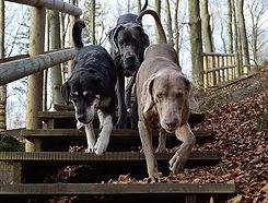 soziale-interaktion-hund.jpg