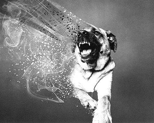 mad-dog-day_edited.jpg