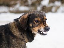 problemhund.jpg