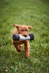 nasenarbeit-hund.jpg