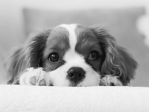 dogtraining-online