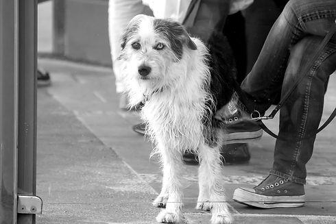 hund-stadttraining_edited.jpg