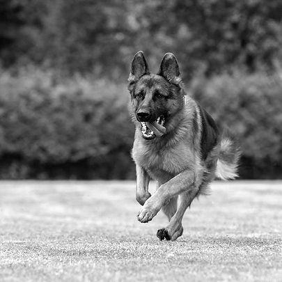 hundetrainer-horgen_edited.jpg