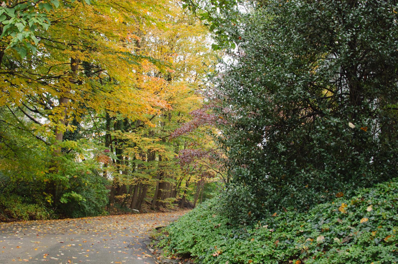 Wissahickon Valley, Chestnut Hill