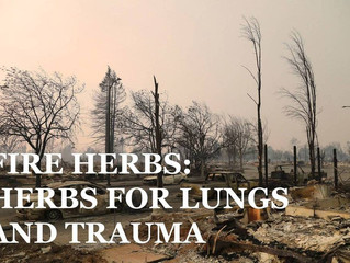 California Fires: How to support your body with the smoke.