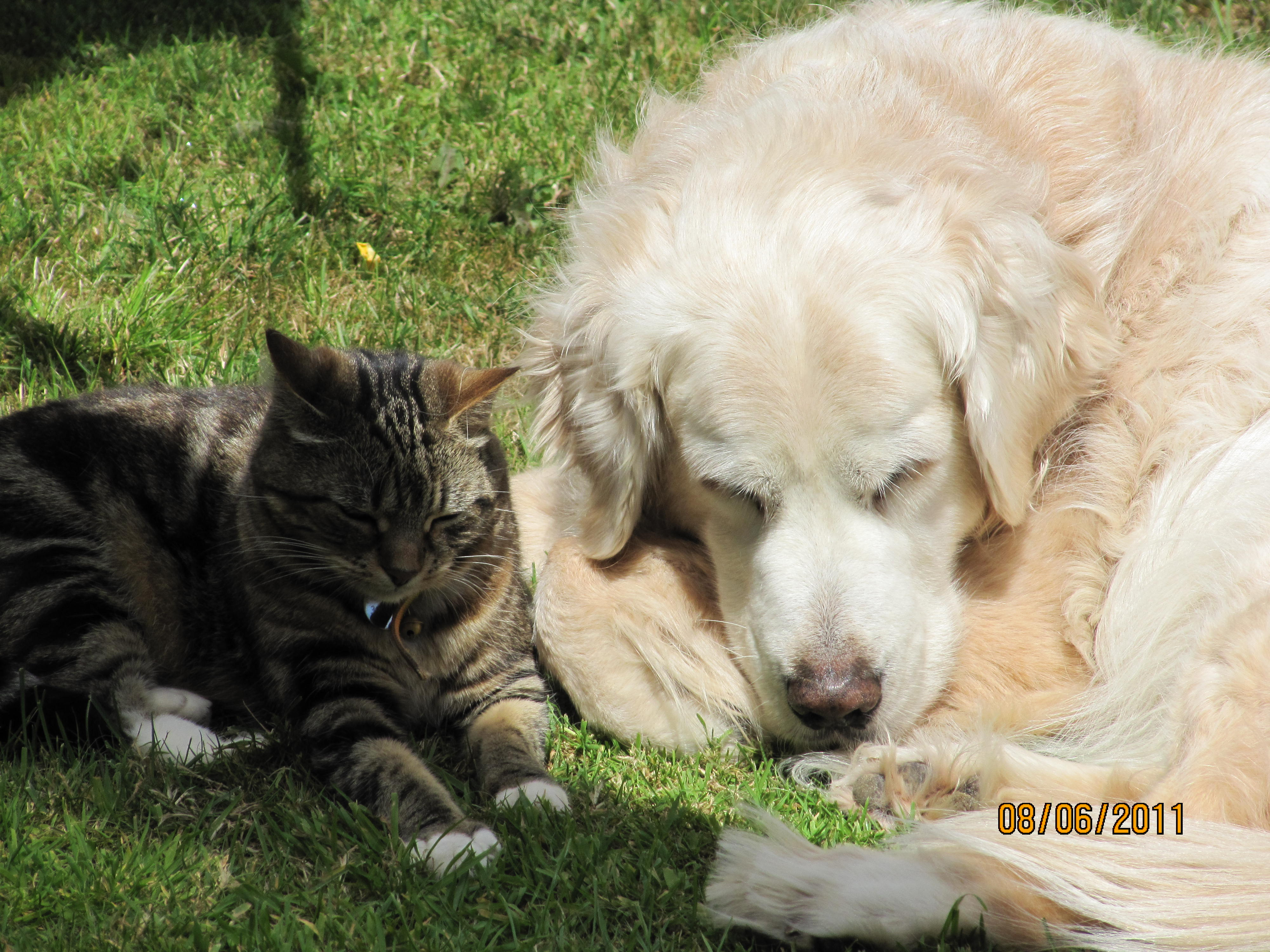 Debbie Baker Pet Care