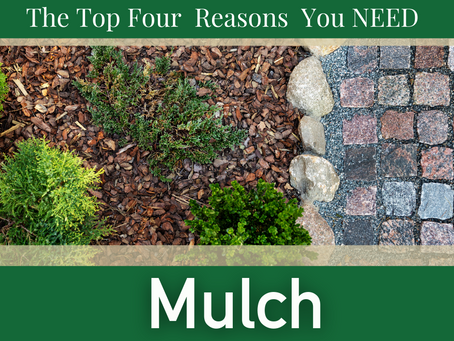 It's All About The Mulch!