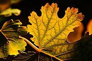 leaf-3716035_960_720.jpg