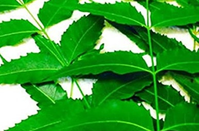 Want to know about Neem cake powder benefit ,here is you answer.