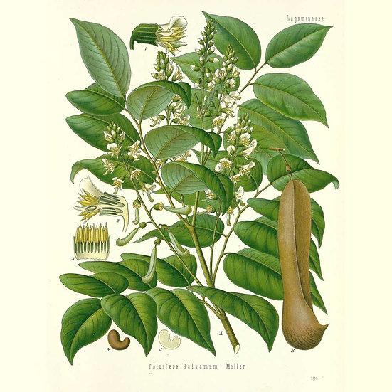Baume de Tolu