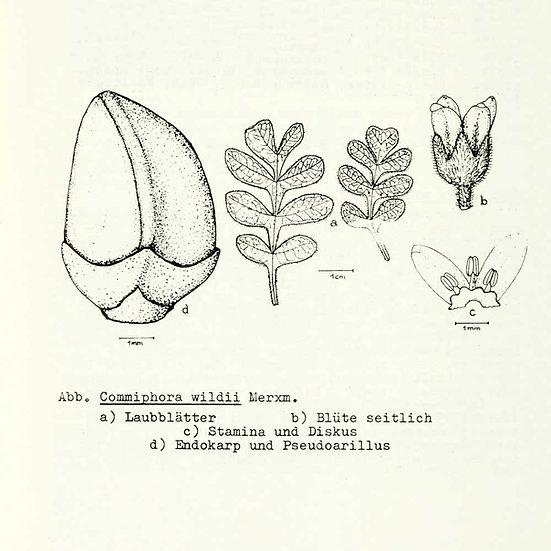 Myrrhe Omumbiri