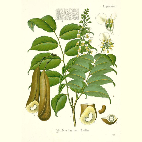 Baume du Pérou