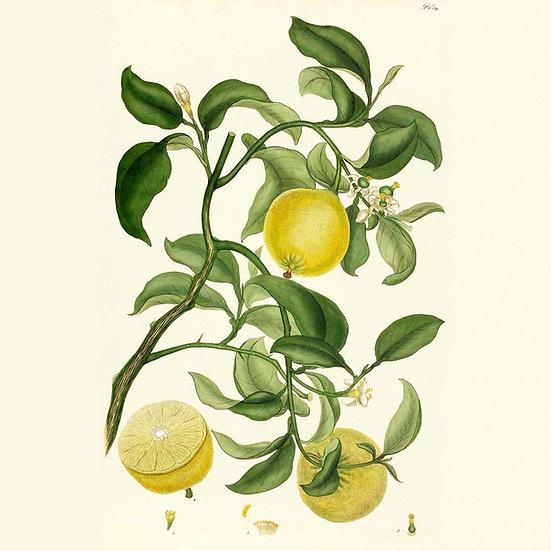 Limette distillée