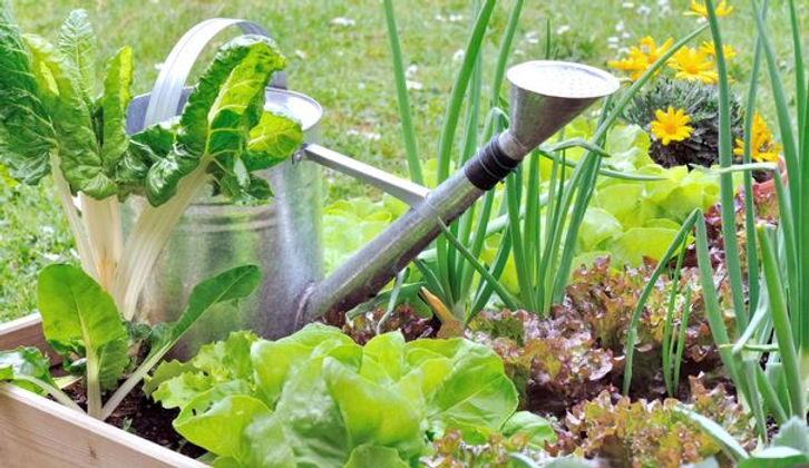 comment-installer-son-potager-carre-en-b
