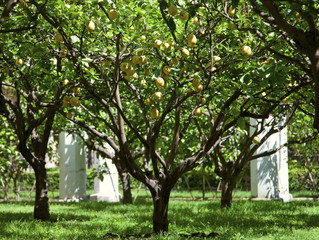 Citrus Care Newsletter