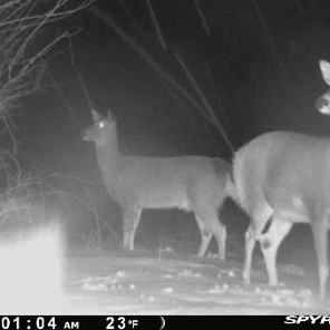 Hard Lessons of my First Deer Season - Part 1