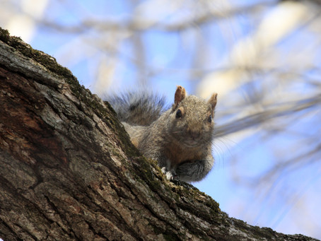 5 Reasons to Start Squirrel Hunting