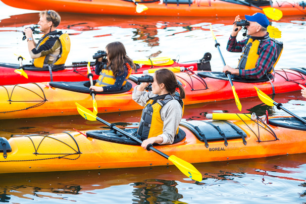 kayakers using binoculars to get a closer look at the wildlife