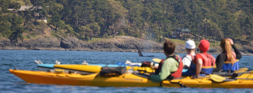 sea kayakers watching an adult male orca