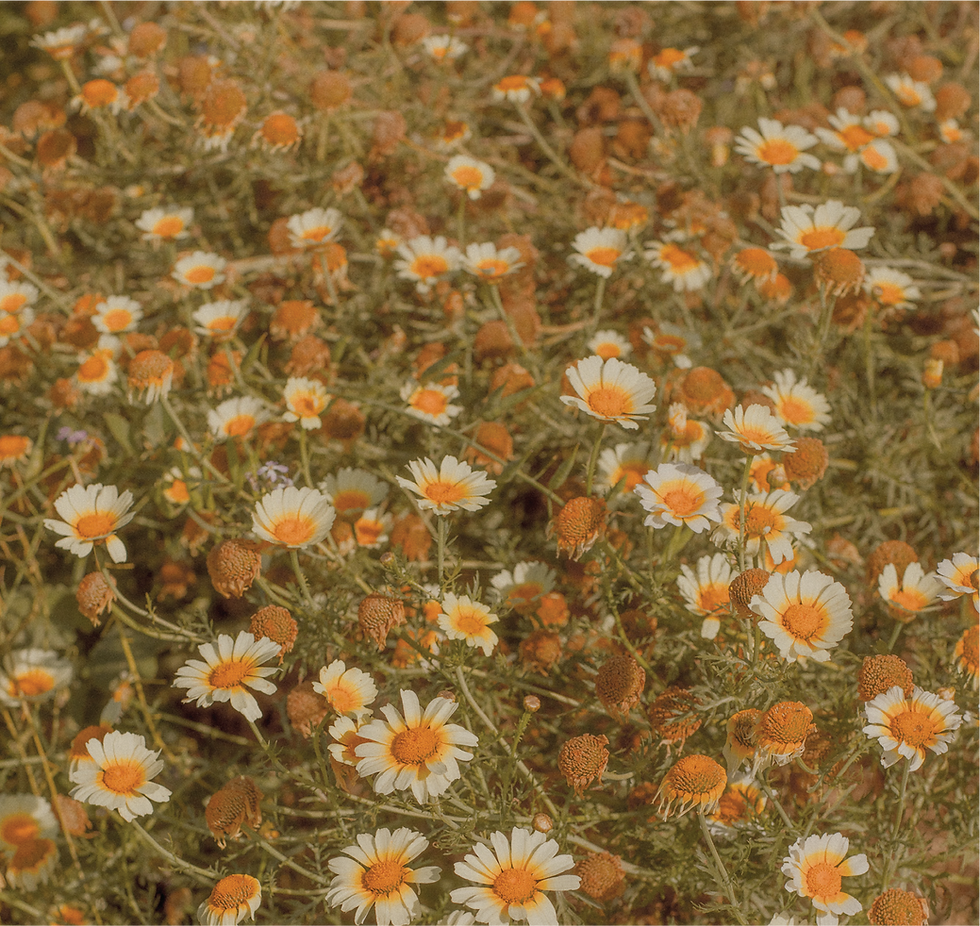 daisy-photo.png